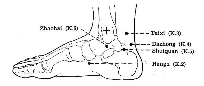 Kidney Channel