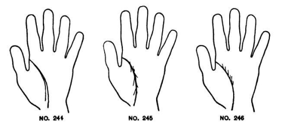 Image result for life line In Palmistry Chained: